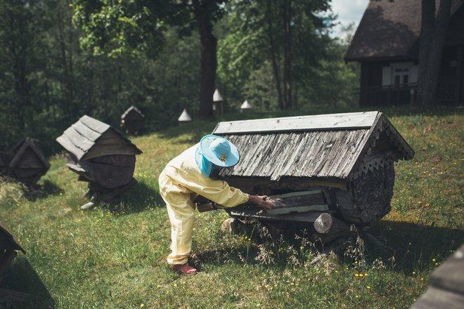 Educational programs by the Beekeeping Museum