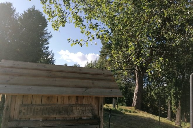 Rupinskai pine